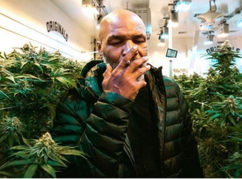 Mike Tyson marihuana
