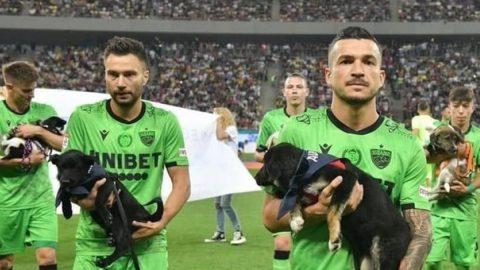 Rumania perros en adopcion